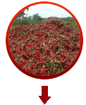 Chilly Spices manufacturer